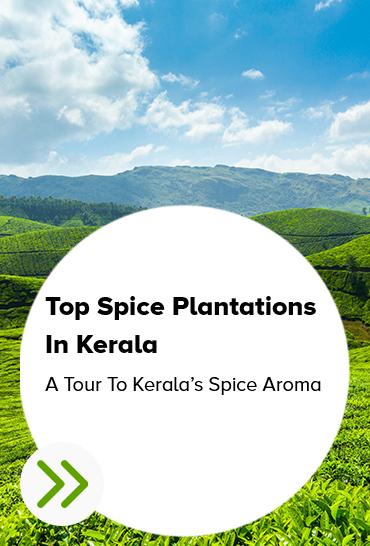 spice plantation munnar